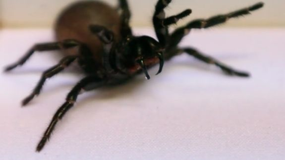 PSA: This Zoo wants your help to catch deadly spiders and nope we're good