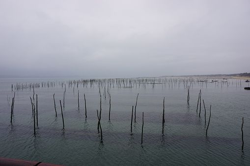Stock Photo : Oyster beds in the Bassin D'Arachon