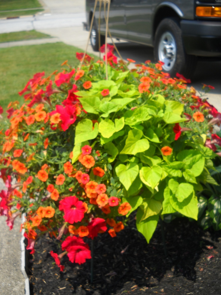 67 best green thumb images on pinterest beautiful for Hearty plants for outdoors