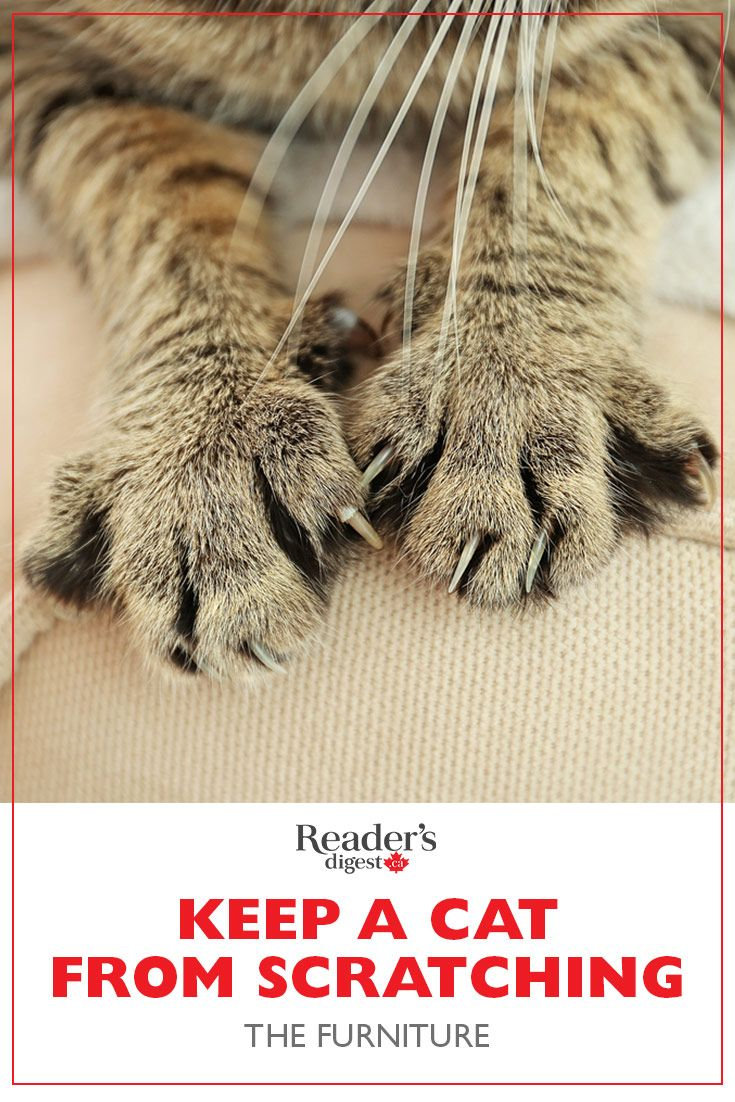 Here S How To Keep A Cat From Scratching The Furniture Cat Scratching Furniture Furniture Scratches Cats