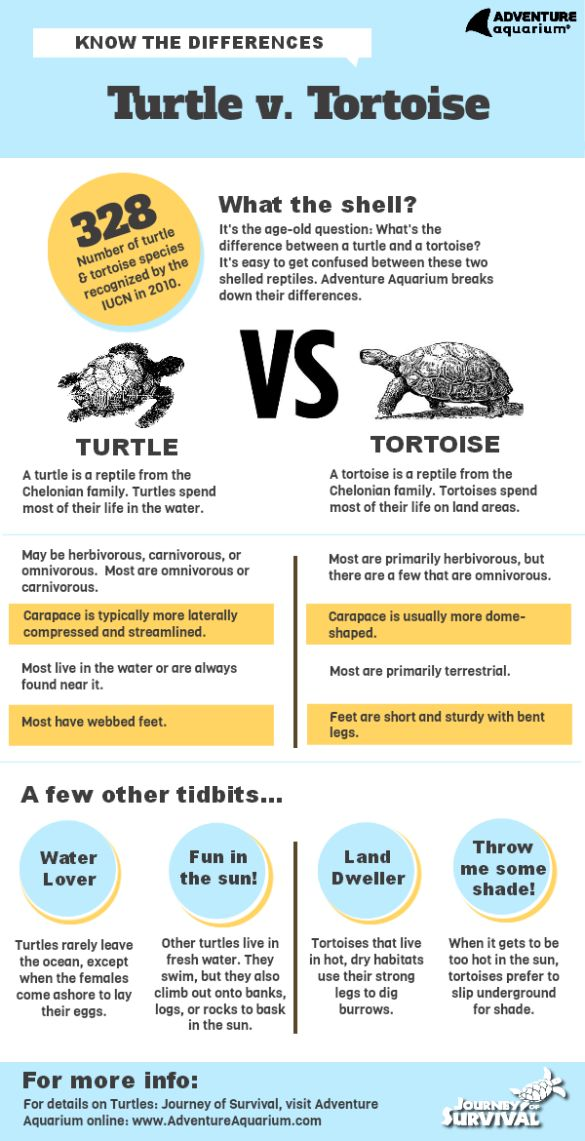 Turtle vs. Tortoise Infographic