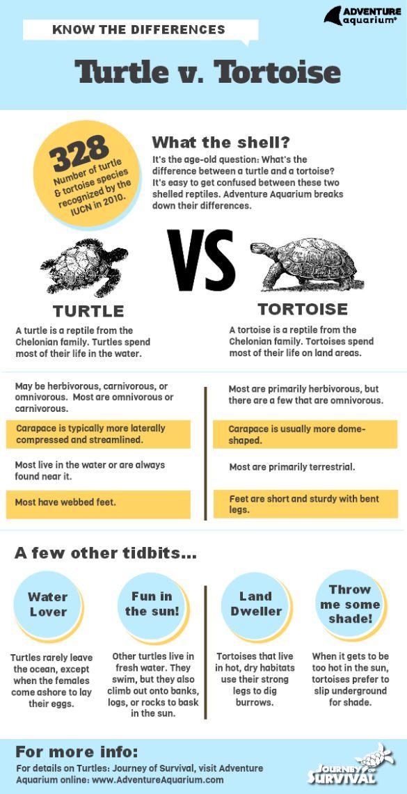 Turtle vs. Tortoise Infographic