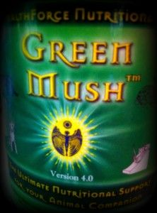 Green Mush:  From my personal experience, an essential part of a rat's diet is Green Mush. Ever since I began feeding my rats Green Mush they've lived much longer lives. My first rat, a male, only lived to be 1 ¾ years. After I began feeding Green Mush to my pet rats, my males have now lived as long as 3 ¼ years. (My preference until recently has been for male rats exclusively. Keep in mind females will live even longer.)