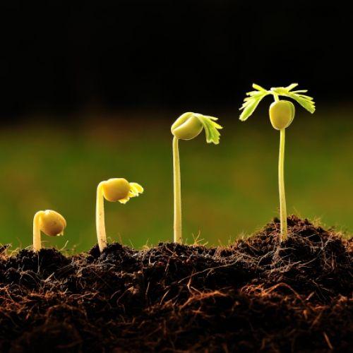 Growing Plants Example