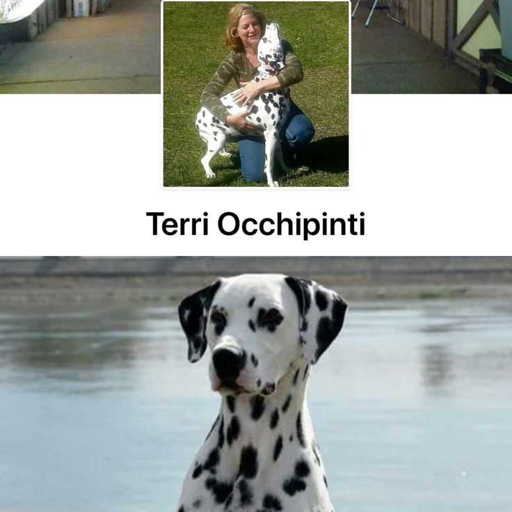 Dalmatian breeder on Facebook I want a puppy from