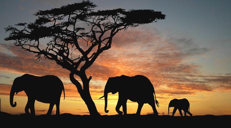Πόσο ασφαλής είναι ένα ταξίδι στην Νότια Αφρική;