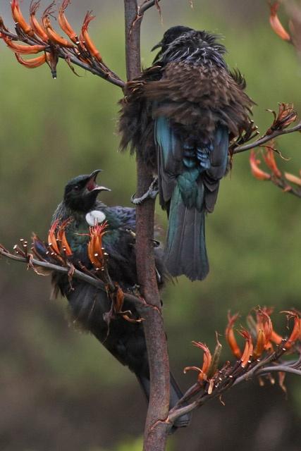 BirdRescue Org.NZ