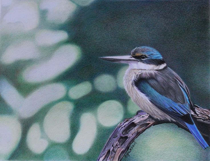 I'm a traditional artist who draws freehand, and enjoys realism.  My favourite genre's of drawing or painting is mainly in colored pencils, pastels but I have been know to bring out the acrylics or oils for fun.  My love of nature is seen in my drawings, especially birds and floral work. I hope you enjoy them :)