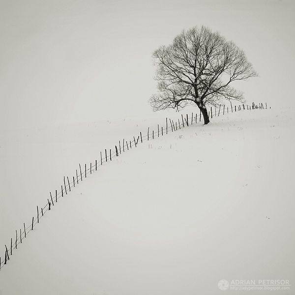 lovemewhite:  fences 5 by *fotolympus