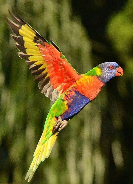 Rainbow Colored BirdGorgeous!!! Colorful Feathers