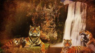 вода, хищники, кошки, тигры, водопад, скалы, горы, фон
