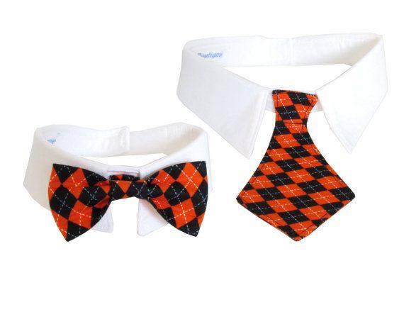 Dog/Cat pointed shirt collar w/ black and orange argyle necktie/bowtie