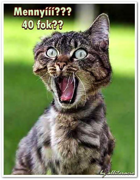 vicces macskás képek szöveggel - Google-keresés