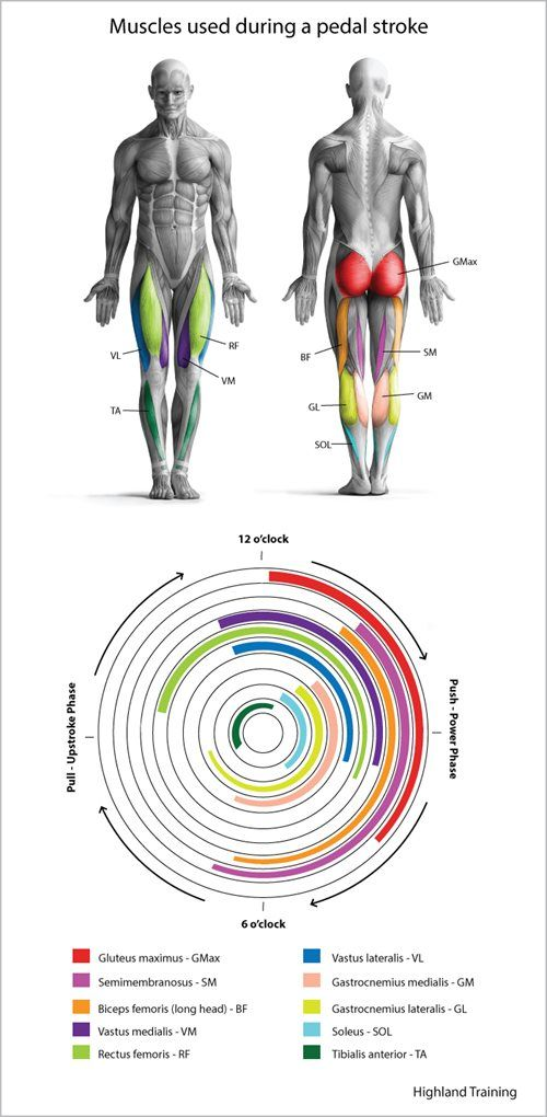 Take a detailed look at which muscles apply power during the phases of your pedal stroke. Then learn how to build those muscles to help you ride faster and stay injury free.