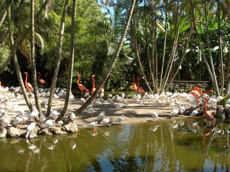 About Flamingo garden, Pembroke pines florida, Rose