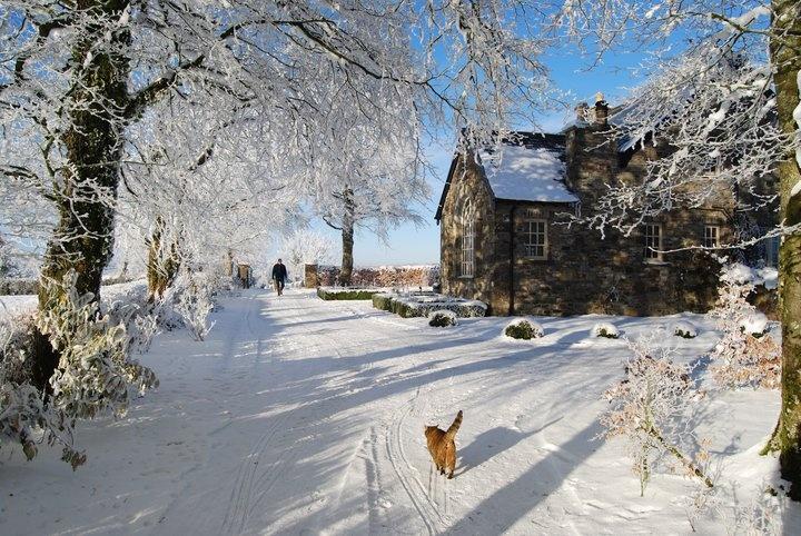 Christmas Trees Northern Ireland