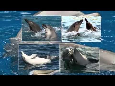 Исцеляющие звуки дельфинов - релакс - YouTube