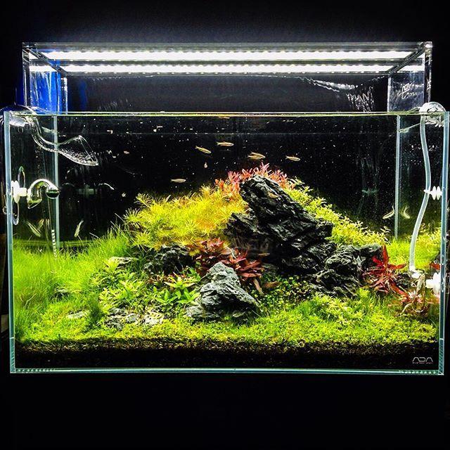 1000+ Images About Aquascape On Pinterest