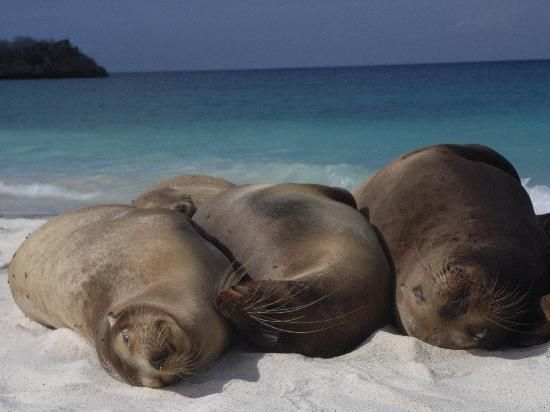 Hang with the seals and other animals at The Galapogos Islands  #Travel #Bucketlist  #GalapogosIslands