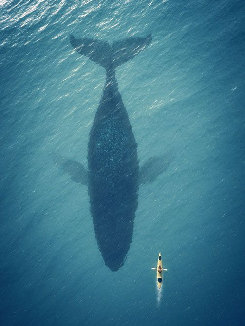 5 White Knuckle Adventure Destinations Kayak with Whales in Canada