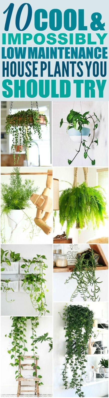 25 best ideas about low maintenance plants on pinterest easy plants to grow house plants and - Easy maintenance house plants ...