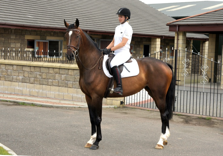 This 17.0hh five-year-old dark bay #DutchWarmblood mare could be the dressage horse for you | For #sale on #HorseDeals