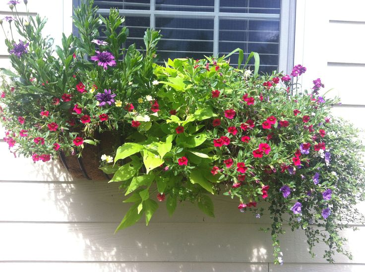 Window box - summer 2013