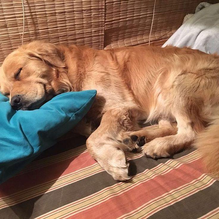 Sin duda Pipo está disfrutando de unas maravillosas vacaciones!!!! Bravo Pipo!!!! Best for Pets