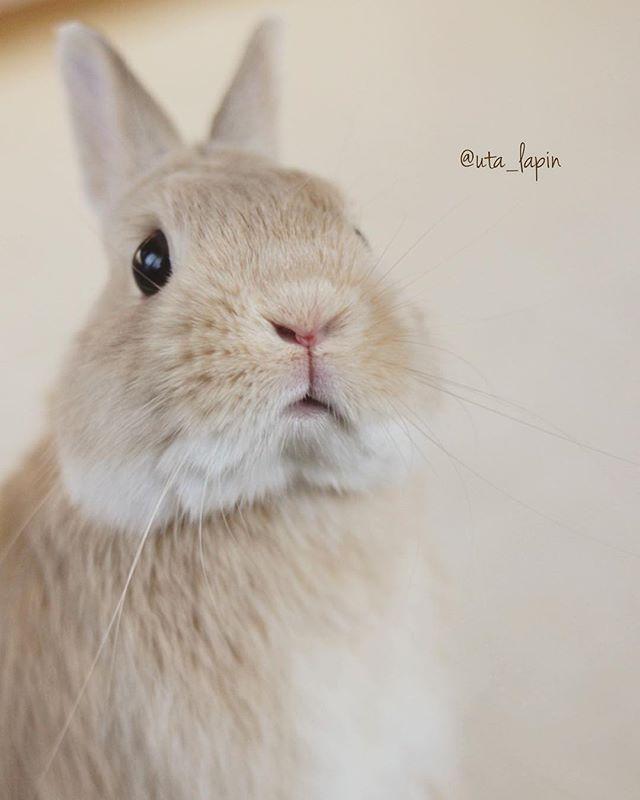Bunny おしゃれまとめの人気アイデア Pinterest Oleg Velkov かわいいペット かわいいウサギ うさぎ