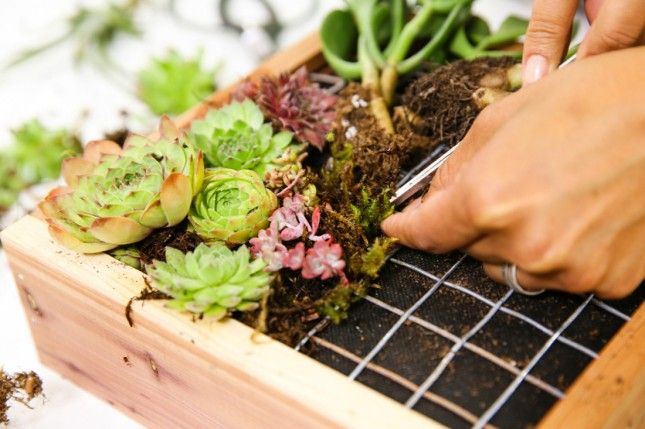 Add a little green to your space with this online succulent gardening class.