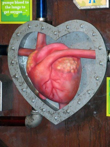 Human heart transplant... photo from derek*b by http://www.flickr.com/photos/blendededu/422514745/