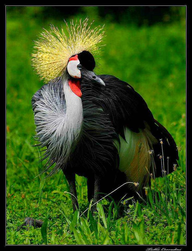 ZOOSAFARI zona ornitologica