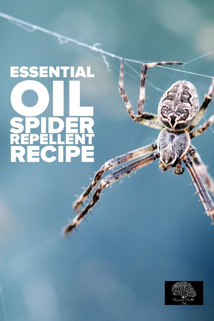 What Essential Oils Repel Spiders Essential Oils Pinterest