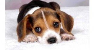 Rassegna di articoli sull'addestramento dei cuccioli