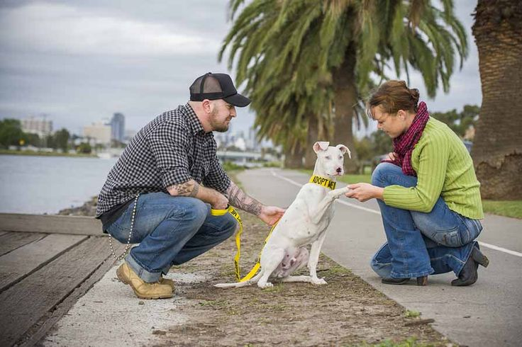 The ADOPT ME range bright yellow dog collar & lead informs the public that a rescue dog is looking for a forever home.