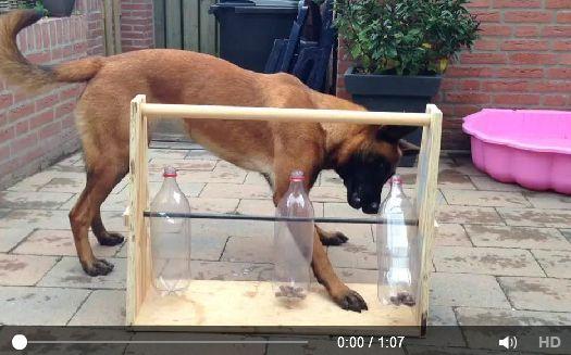 Brinquedo para cachorros com garrafas pet.