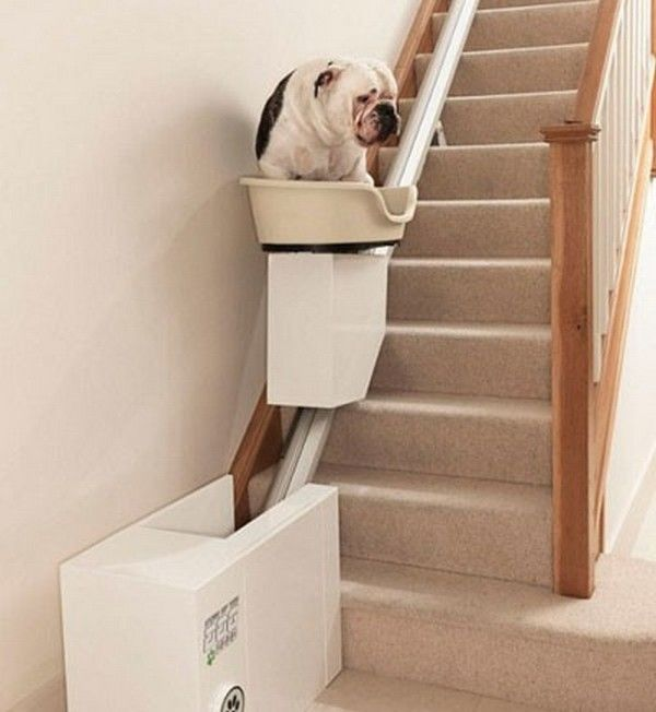 I wish we had had this when my puppies got old!  We tried to make a puppy ramp, but that seemed to freak them out ^^;...