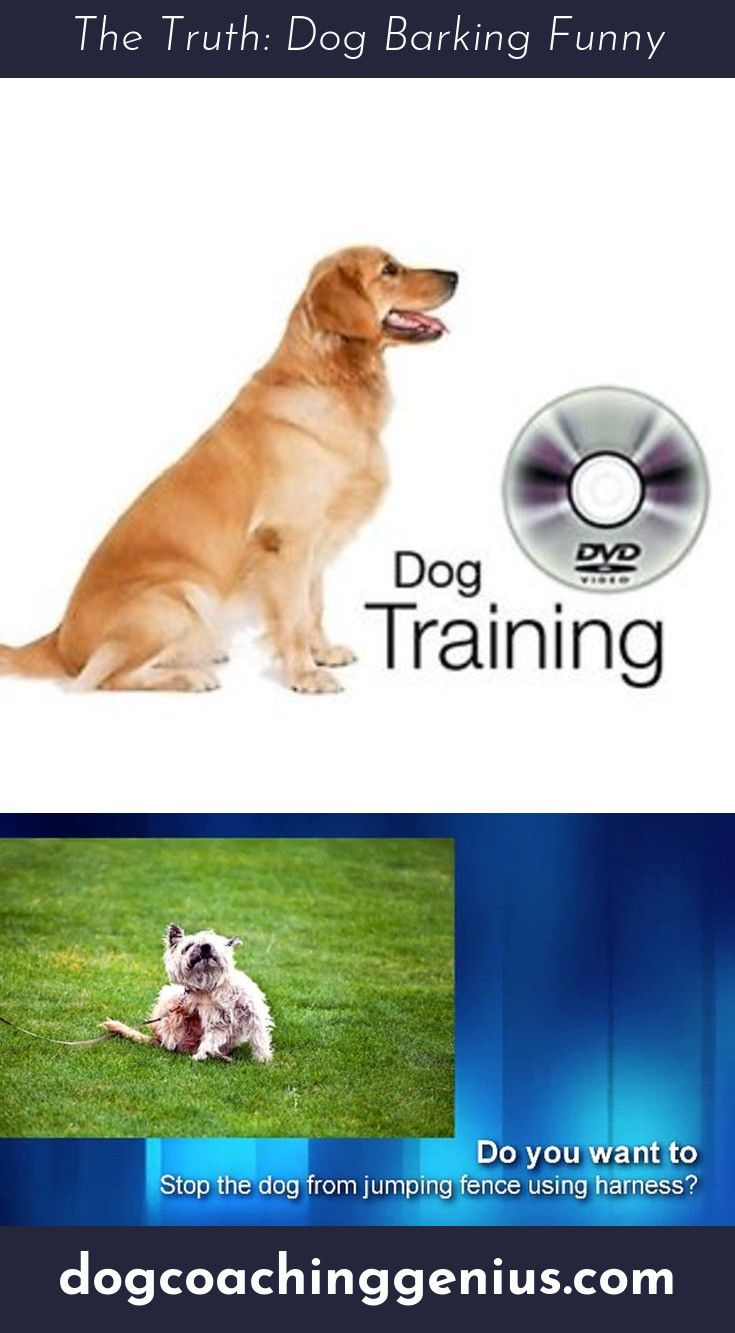 Read More About Dog Growling Dog Growling Dogs Dog Barking
