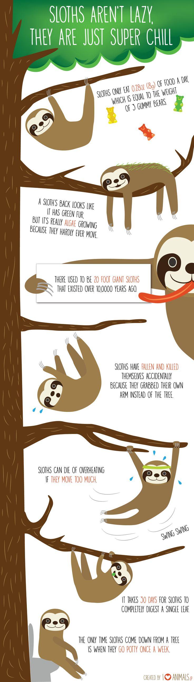 http://iloveanimals.jp/sloths/
