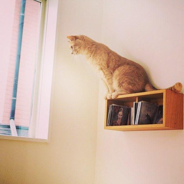 """Best Cat Merch on Instagram: """"📸 @naaaaaa72 • • • • • • • #instacat #meow #instacat_meows #kitty #kittycat #cutecat #instapet #kittylove #instakitty #cateye #cateyes…"""""""