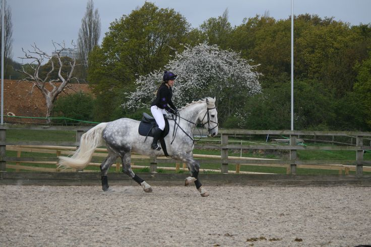 In one of our outdoor sand schools this is one of our str jumpers! looking great