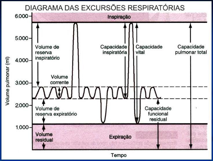 O estudo dos volumes pulmonares estáticos (volumes e capacidades pulmonares) além de ser parte essencial da disciplina de fisioterapia pneum...
