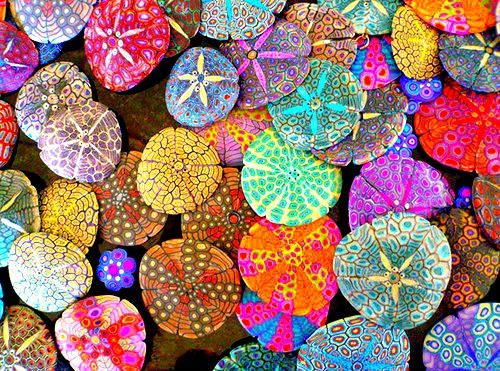 Great colour DIY art using sea urchins or stones -Add a little colour to your decor - dj_soulcraft.