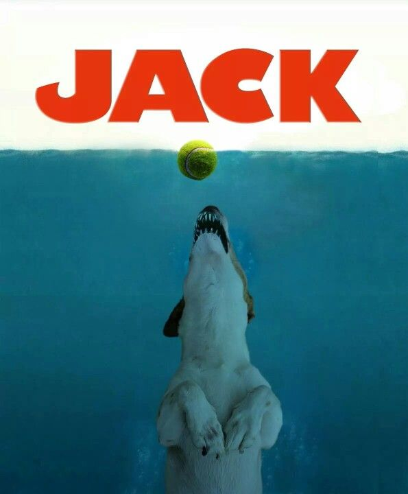 Jack attack! this is the best!                                                                                                                                                     More