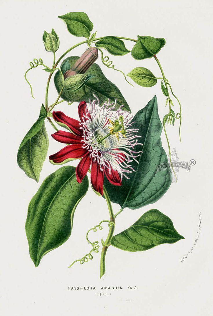 Les 298 meilleures images du tableau botanique sur for Botanic fleurs artificielles