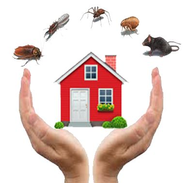Our company provide the high quality service for all clients in Dubai. Different methods are used to deal with different pest control services who can help you out. Among all the pest control and cleaning services are the one who are hard to deal with clients.Go here : http://alqudrapestcontrol.com/