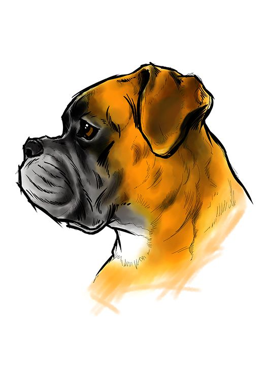 Boxer #dog #drawing #painting