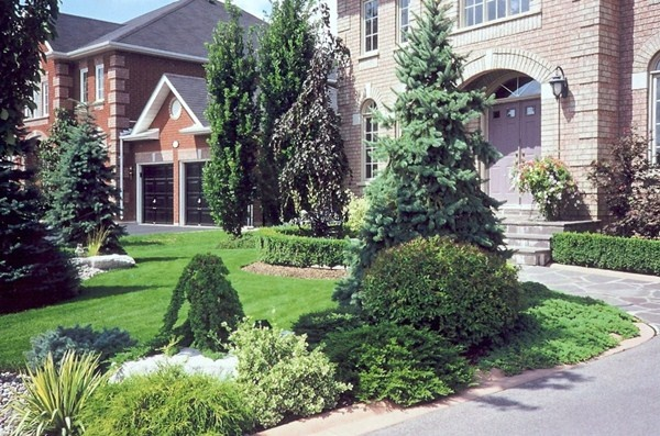 17 best images about gardening on pinterest exposed for Accent tree for corner of house