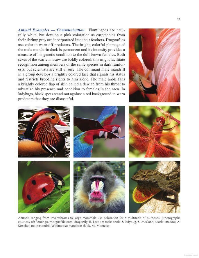 Architecture Follows Nature-Biomimetic Principles for Innovative Design - Ilaria Mazzoleni - Google Books