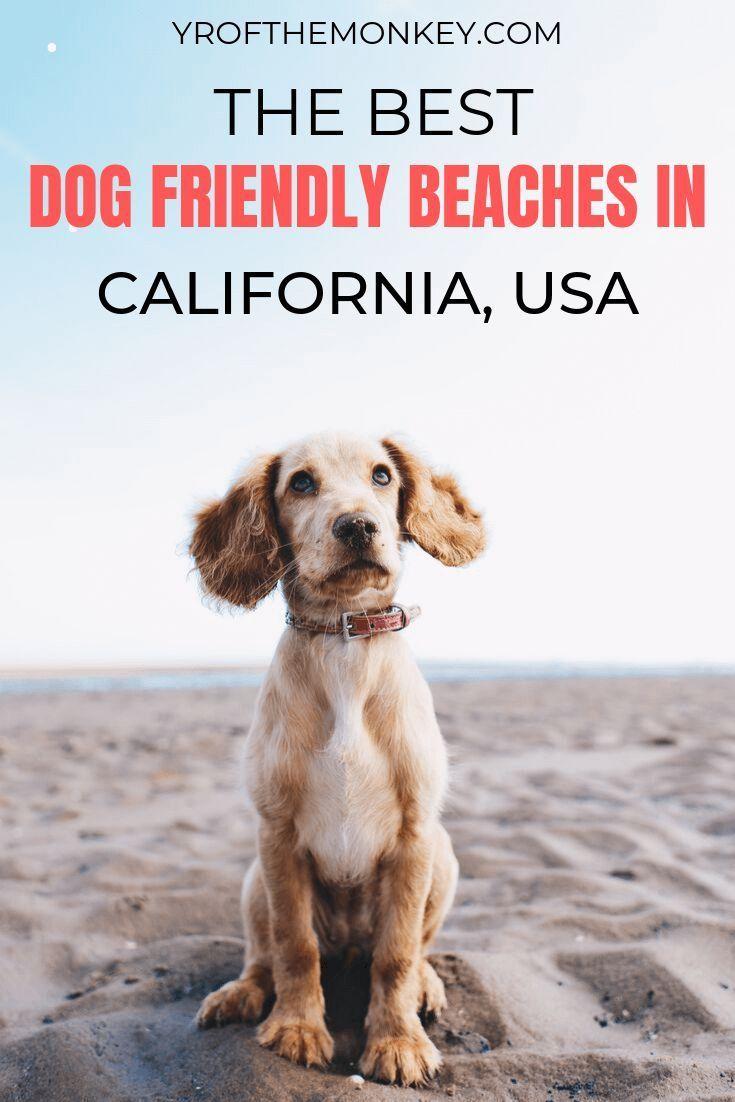 Top Dog Friendly Beaches In California A Dog Mom S Guide Dog Friendly Beach Dog Friends Dog Friendly Hotels